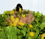 Green salad with tuna and sauce fine spices